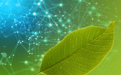 Traçabilité carbone, crédits carbone et Blockchain